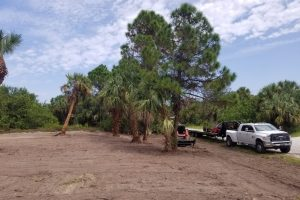 land clearing 9